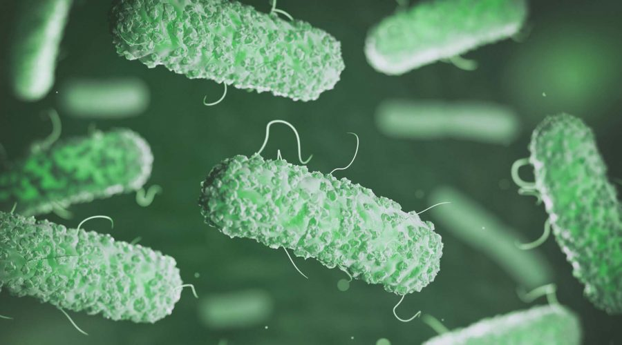 Enterobacterias. Gram-negative bacterias escherichia coli, salmo